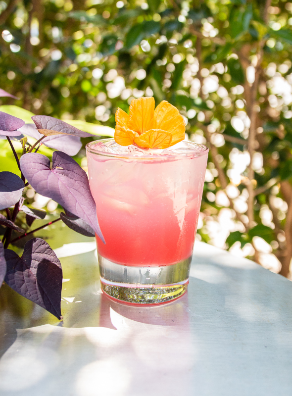 seasons 52 hibiscus gin and tonic