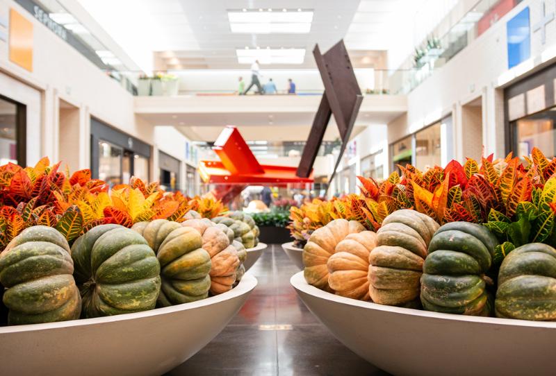 northpark pumpkins 2019