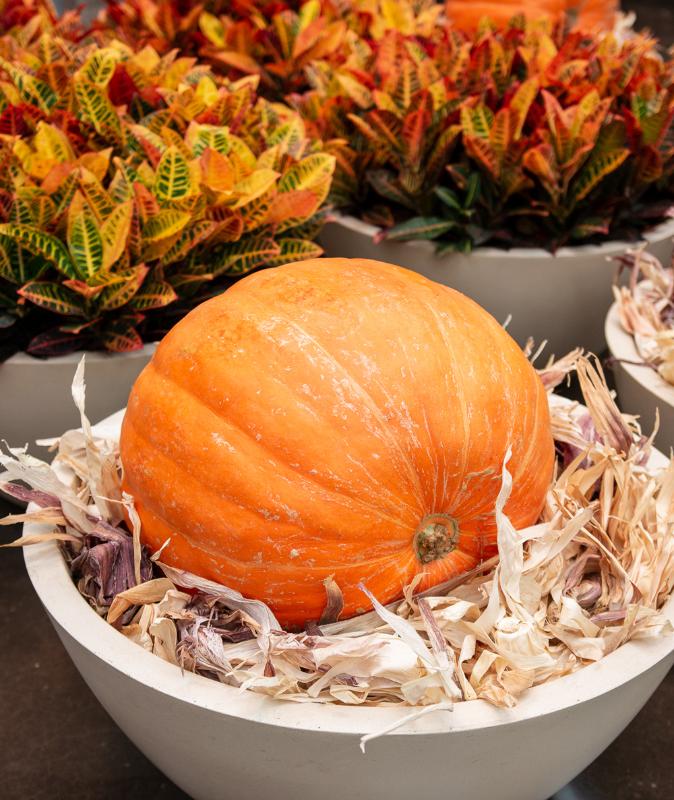northpark big pumpkins 2019