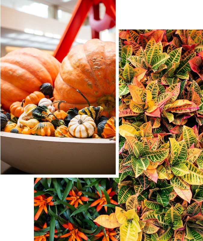 northpark fall landscaping