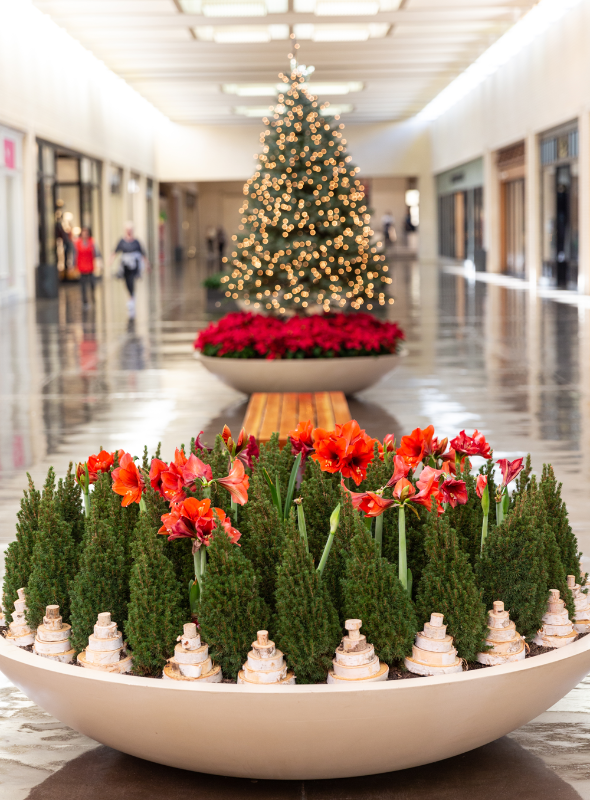 northpark landscaping holiday