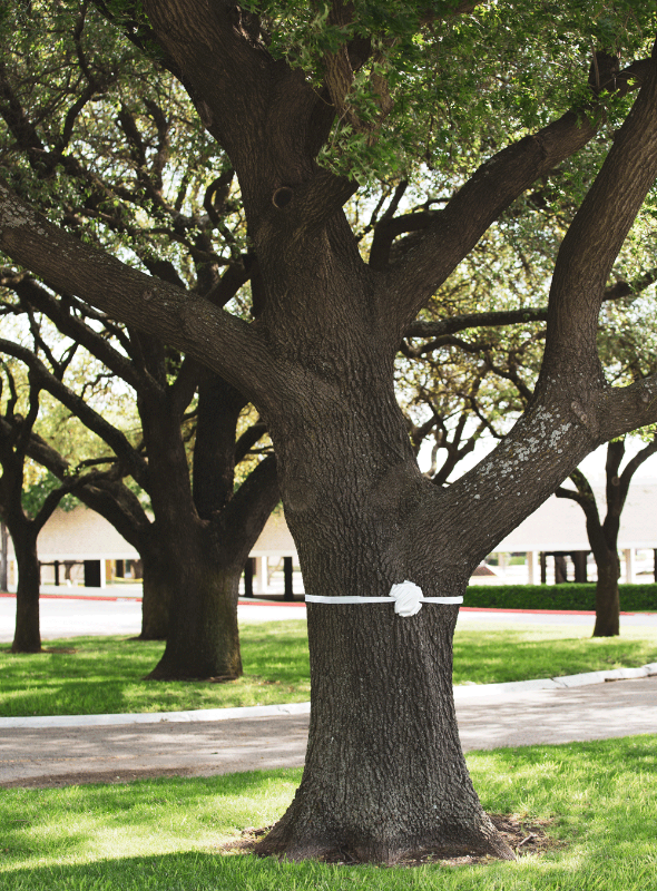 trees northpark white ribbon