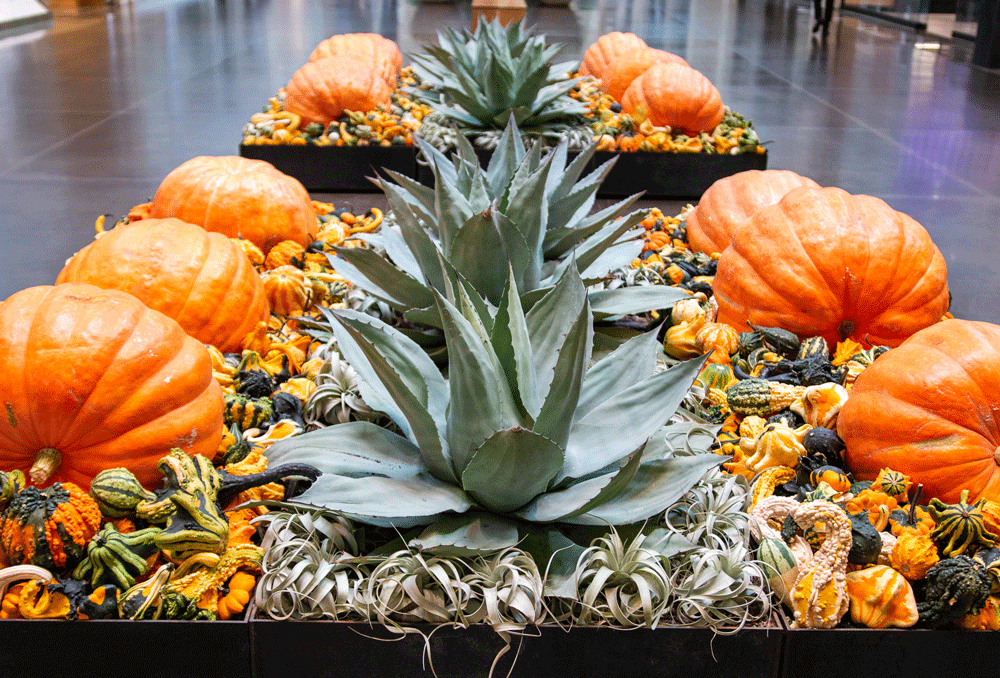 northpark pumpkins