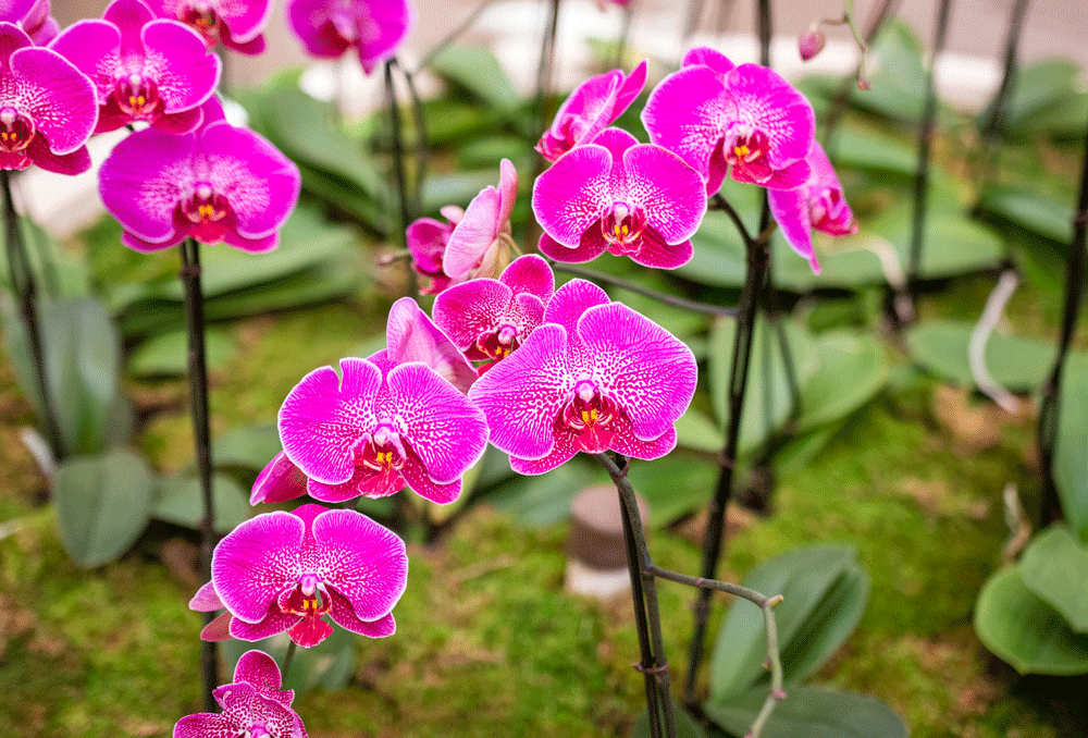 northpark orchids