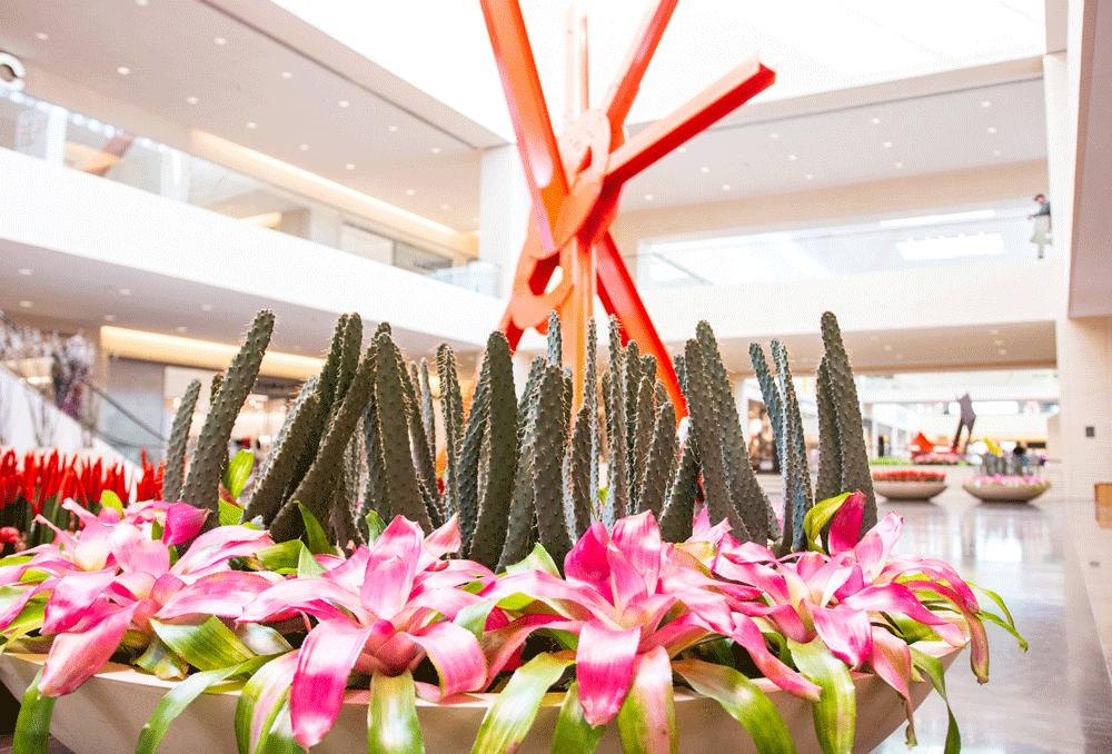 ad astra northpark cacti