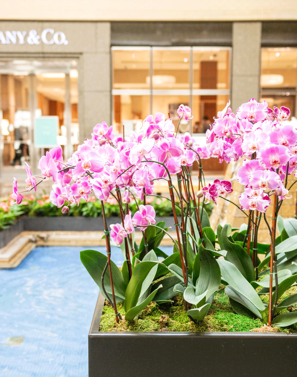 northpark orchids neiman marcus court
